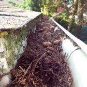 gutter repair jacksonville, fl